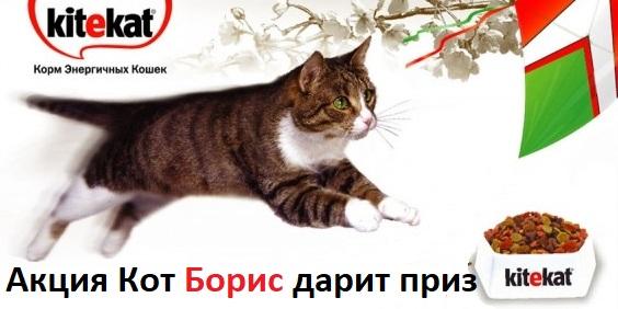 Акция кот Борис дарит приз